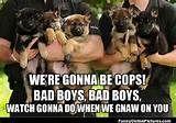 Funny Cop Dog Meme