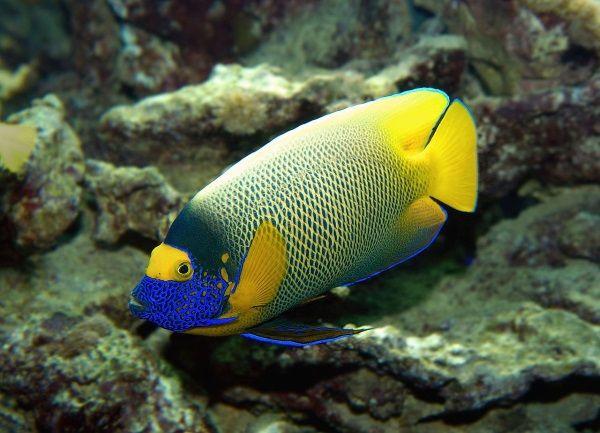 Algenplage im Meerwasser und algenfressende Fische   Infos / Blog   MaxLumen [Süß- & Meerwasser LED Aquarium Beleuchtung]
