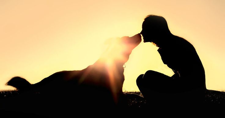 Can Liver Cancer Be Treated In Dog and Think about Natural Remedies For Liver Cancer In Dog?