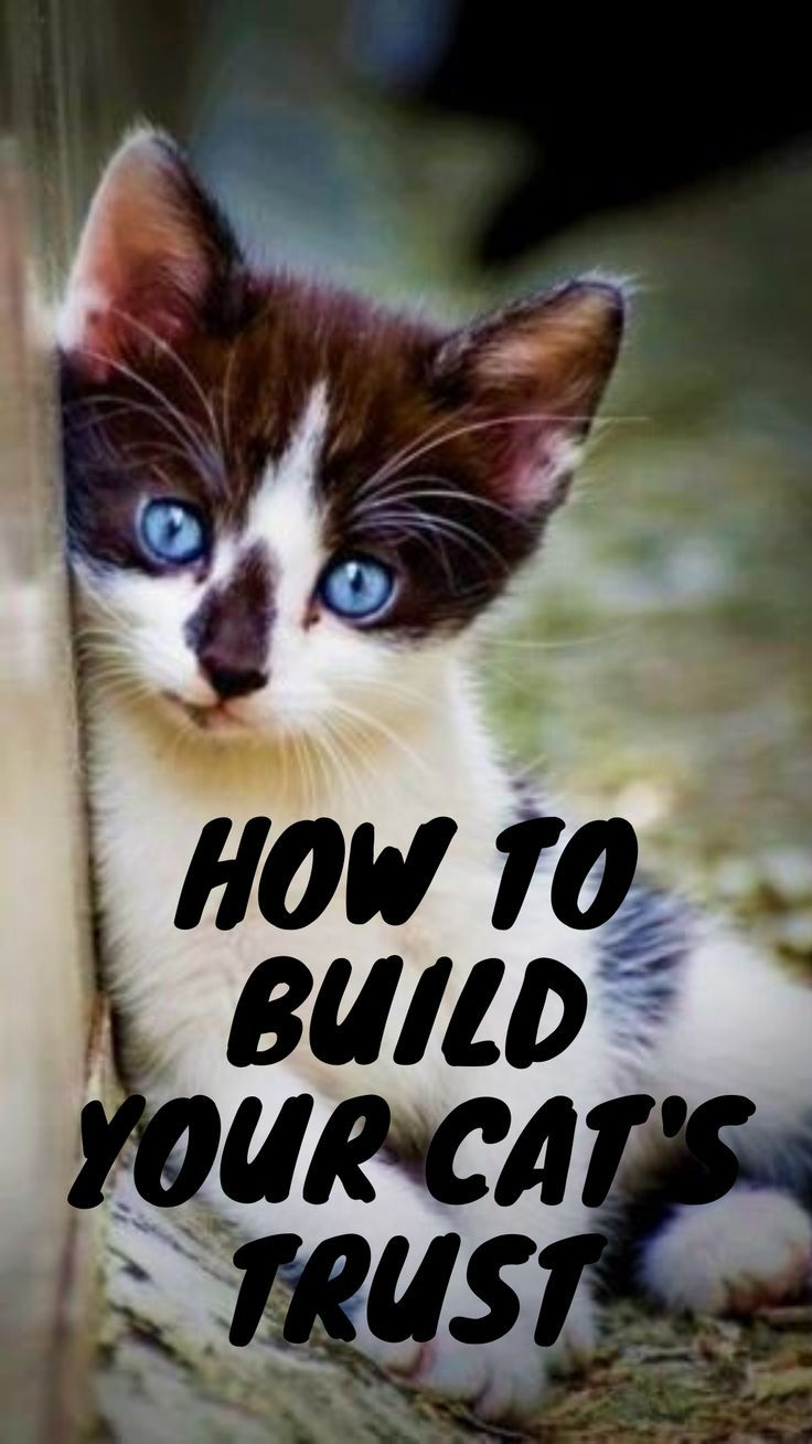 Ways To Gain The Trust Of Your Cat Cats Cat Facts Funny Cats