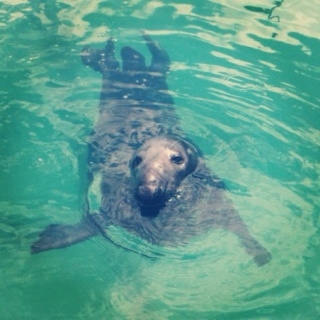 seal in newquay