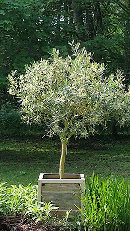 Privater Garten: Blumenkübel - Pflanzkübel - Holzkübel online kaufen
