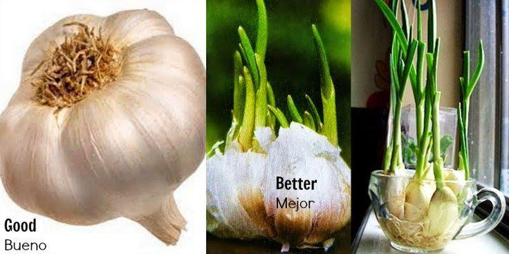 Sopa de Hipócrates es parte de la Terapia Gerson inventado por el Dr. Max Gerson . La dieta de Gerson se le atribuye la curación de muchas p...