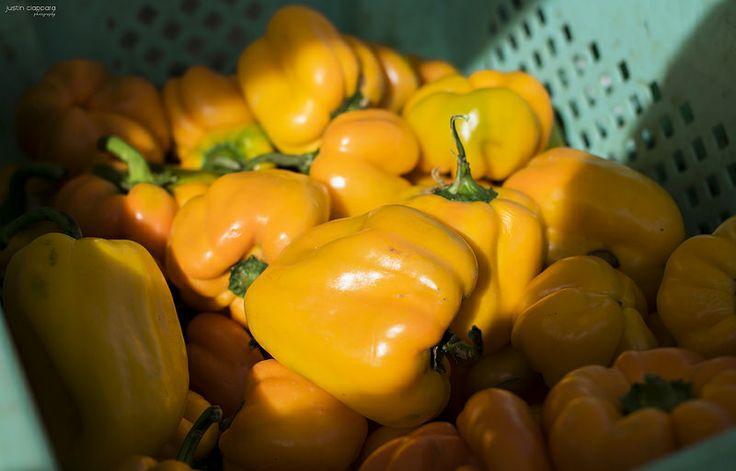 Yellow Bell Peppers at Ta' Qali Farmers' Market