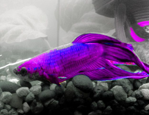 Blue And Purple Fish Betta Names