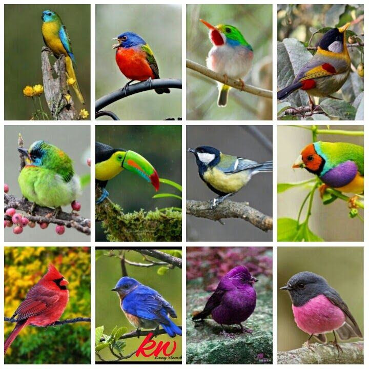 Different types of bea... Different Kinds Of Birds