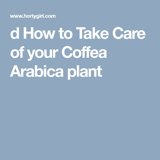 d       How to Take Care of your Coffea Arabica plant