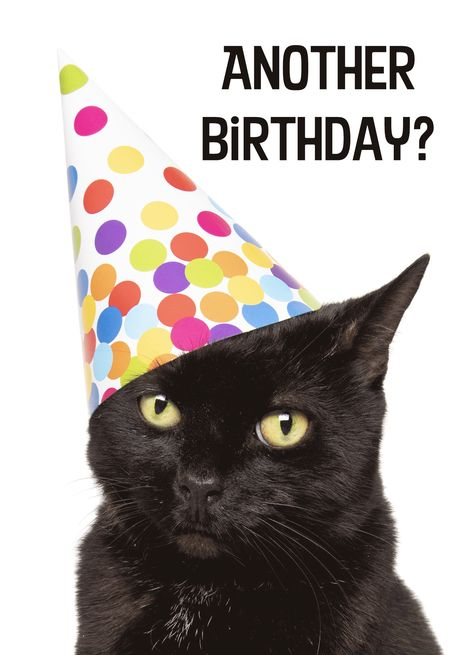 happy birthday for anyone sarcastic cat in party hat humor