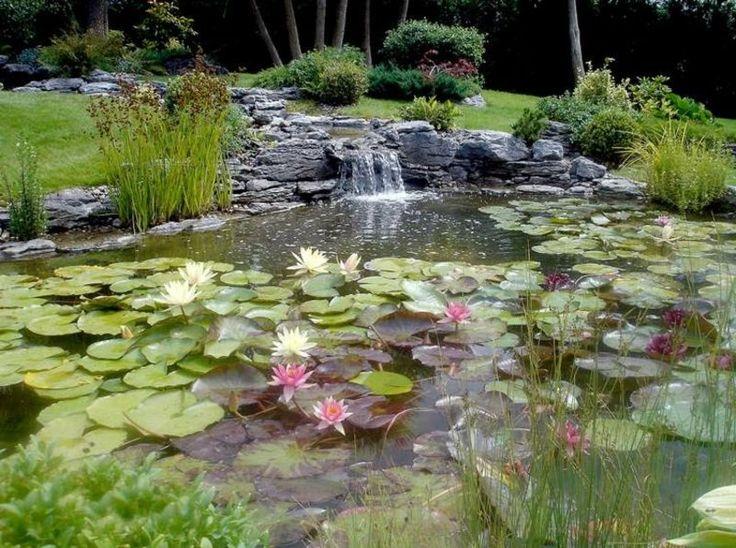 Die besten 25+ Wasserlilien Ideen auf Pinterest Lotusblumen - gartenteich mit brucke und bachlauf
