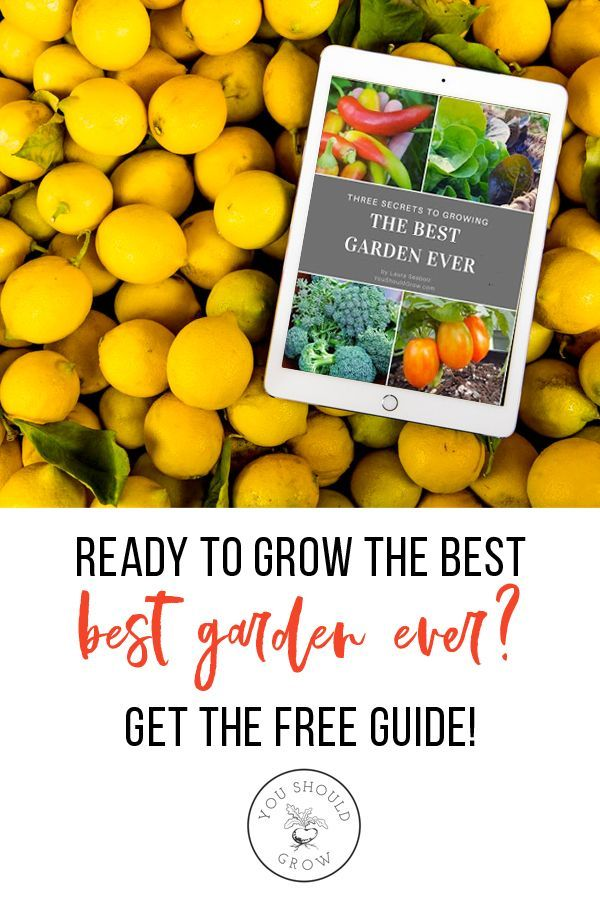 Growing Citrus The Essential Gardener's Guide