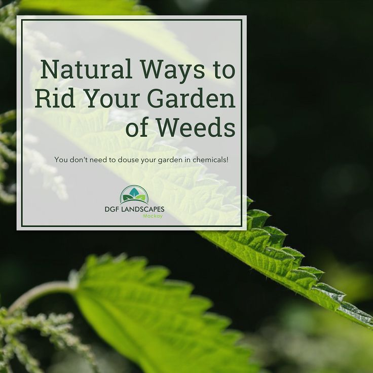 Natural Ways to Rid Your Garden of Weeds   DGF Landscapes Mackay
