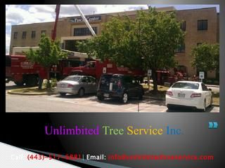 Tree Removal Service in Glen Burnie, MD  Tree Trimming Pasadena, Tree Trimming Columbia, Tree Service Pasadena, Tree Service Glen Burnie, Tree Service Clarksville, Tree Service Baltimore, Tree Service Annapolis, Tree Removal Maryland, Tree Service Ellicott City, Tree Service Columbia, Tree Service Bowie, Tree Service Baltimore, Tree Service Burtonsville, Tree Service Silver Spring, Tree Service Towson,  Tree Service Millersville,  Tree Removal Millersville, Tree Trimming Millersville, Tree…