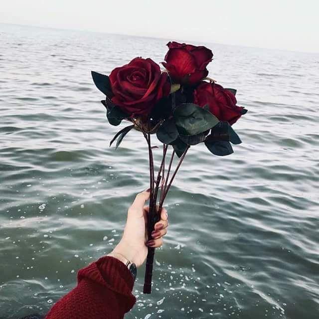 Flower Amazing Flowers Ocean Nature Rose Water Sea Https Weheartit Com Entry 324797785 Aesthetic Roses Aesthetic Wallpapers Flower Aesthetic