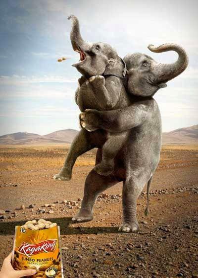 Negeri Humor: Mitos Gajah Suka Kacang