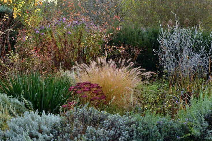 9m2 With Wild Garden Made By Wiktor Klyk Smallgarden Wildgarden Moderngarden Polishgarden Garde Garden Border Plants Landscape Design Ornamental Grasses
