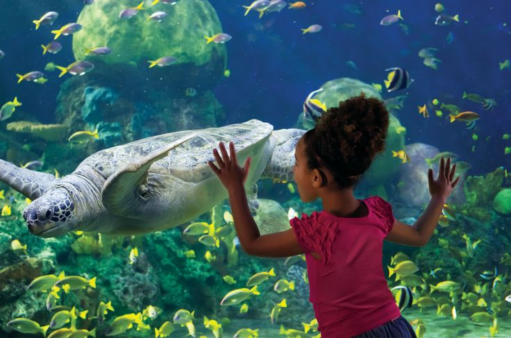 TurtleTrek gets you closer than ever before to the lives of one of the worlds' best loved and most vulnerable reptiles – the sea turtle.