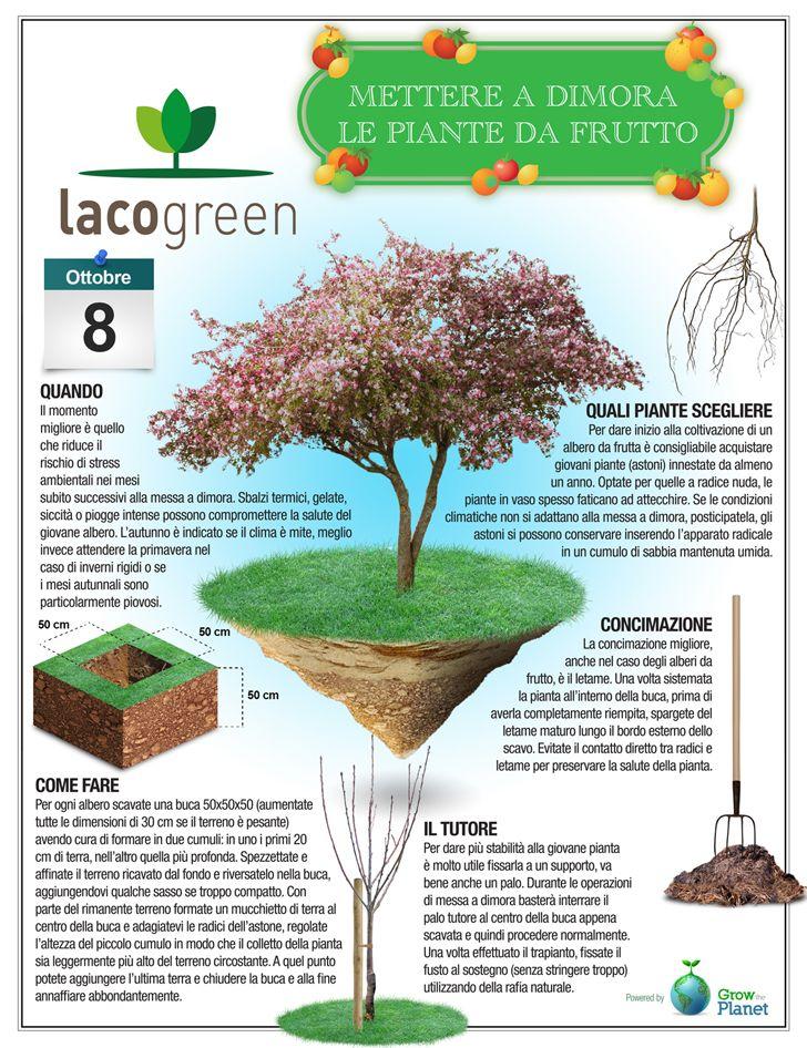 17 best images about giardinaggio on pinterest gardens - Cosa mettere al posto dell erba in giardino ...