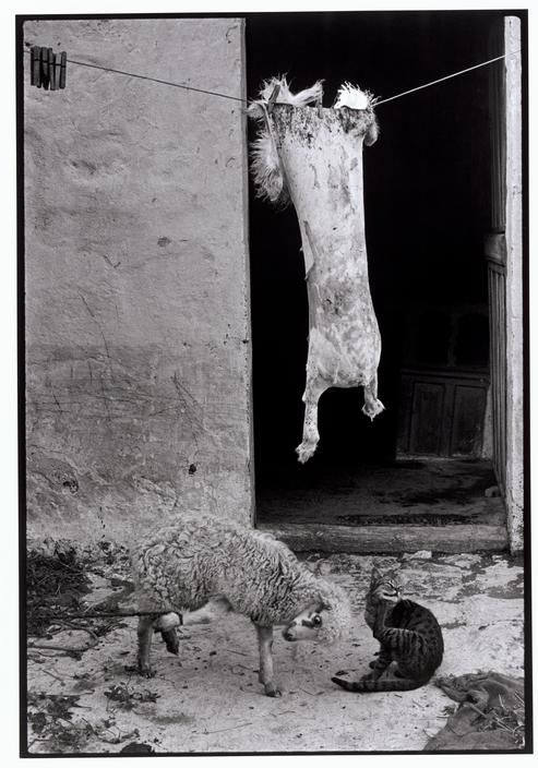 Constantine Manos 1964 Greece. Karpathos. 1964. Sheepskin hanging to dry.