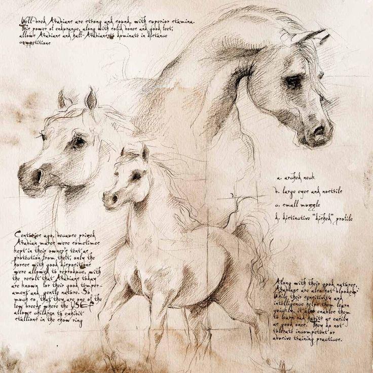 913 best Leonardo da Vinci images on Pinterest Da vinci painting