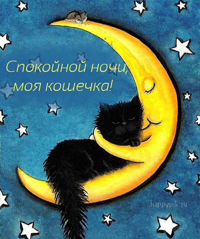 Картинка, красивые открытки с кошками спокойной ночи