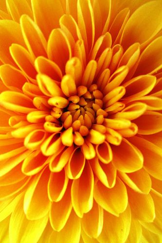 Up Close Yellow Flower  Picture 13655