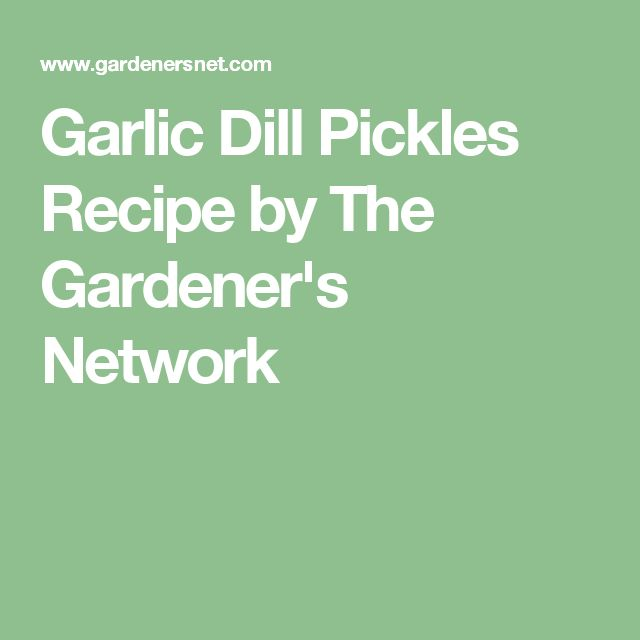 Garlic Dill Pickles Recipe by The Gardener's Network