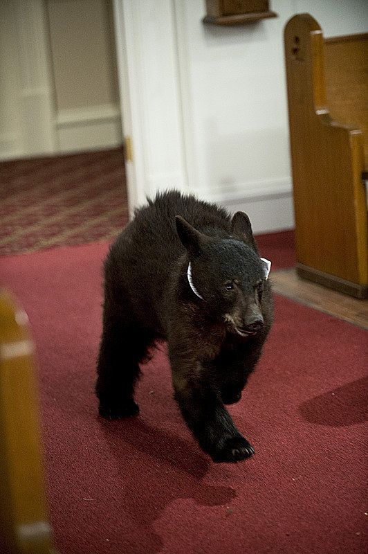 Seriously though. I would be 200% okay with having a ring bear for my wedding.