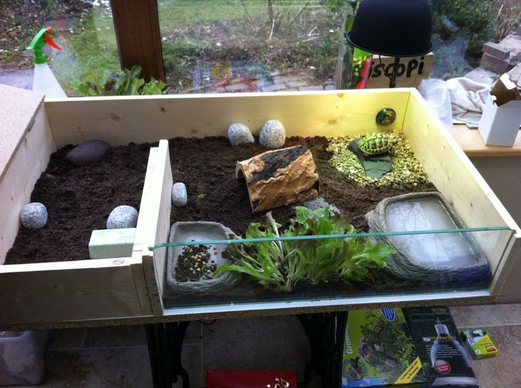1000 images about outdoor turtle enclosures on pinterest for Tortoise table org uk