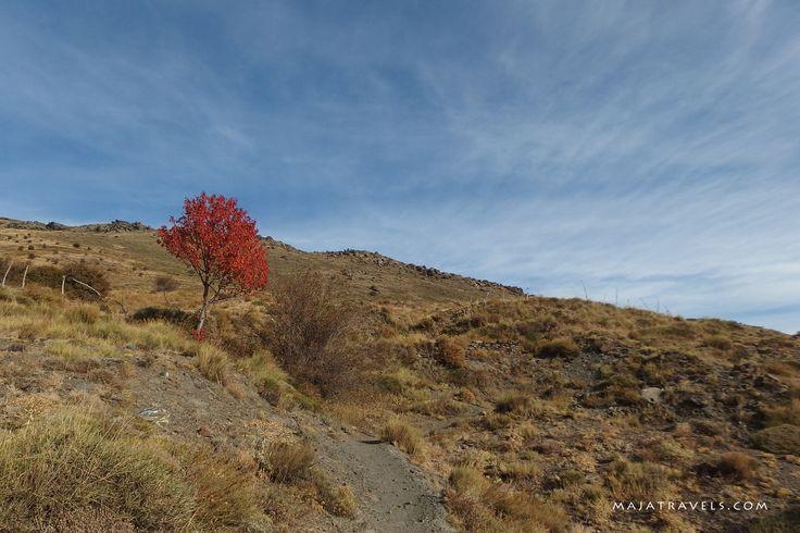 Sierra Nevada National Park, Andalusia, Spain