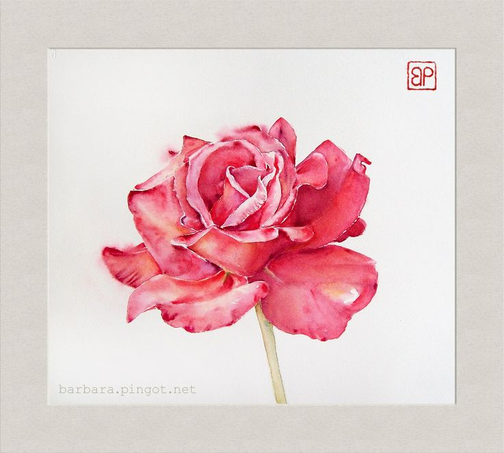 Rozane Zen\Rose Zen by stokrotas
