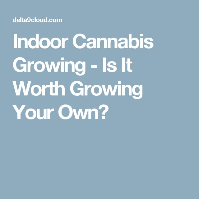 Indoor Cannabis Growing - Is It Worth Growing Your Own?