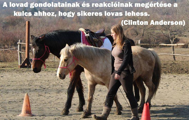A lovad gondolatainak és reakcióinak megértése a kulcs ahhoz, hogy sikeres lovas lehess. (Clinton Anderson)