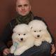 Puppies for Sale at PuppyFind.com