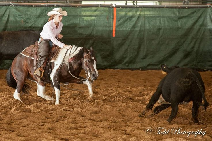 Cutting horses are amazing ....anticipating every move of the calf.