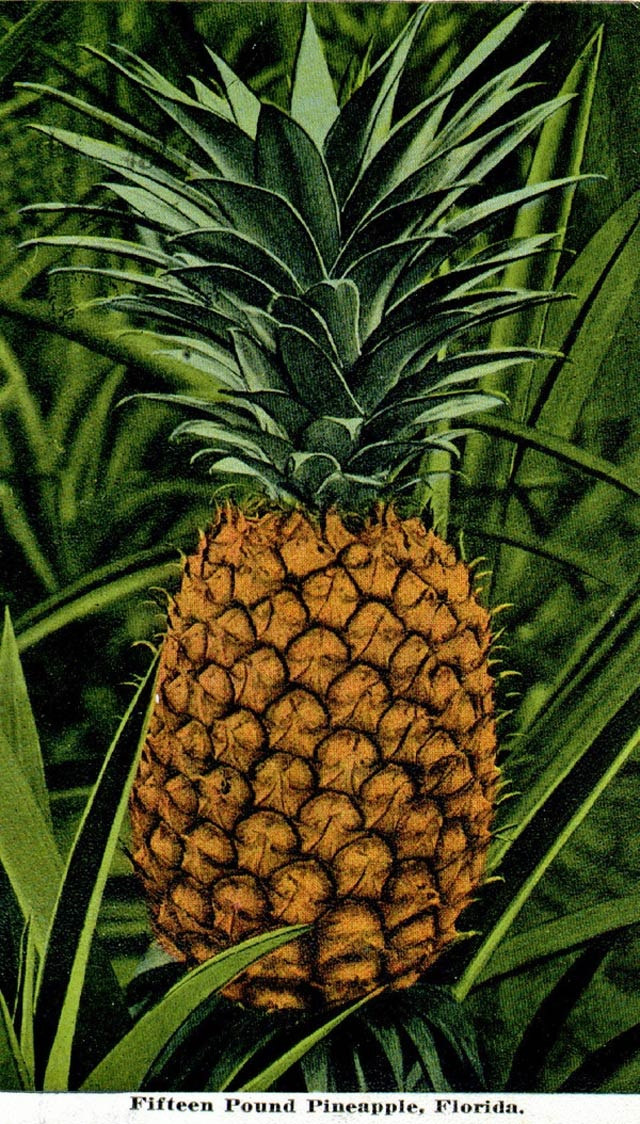 Pineapples in Florida History