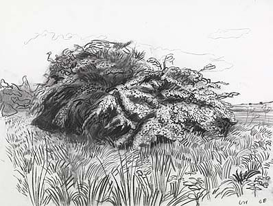 Line Drawing Grass : Best david hockney line drawings images