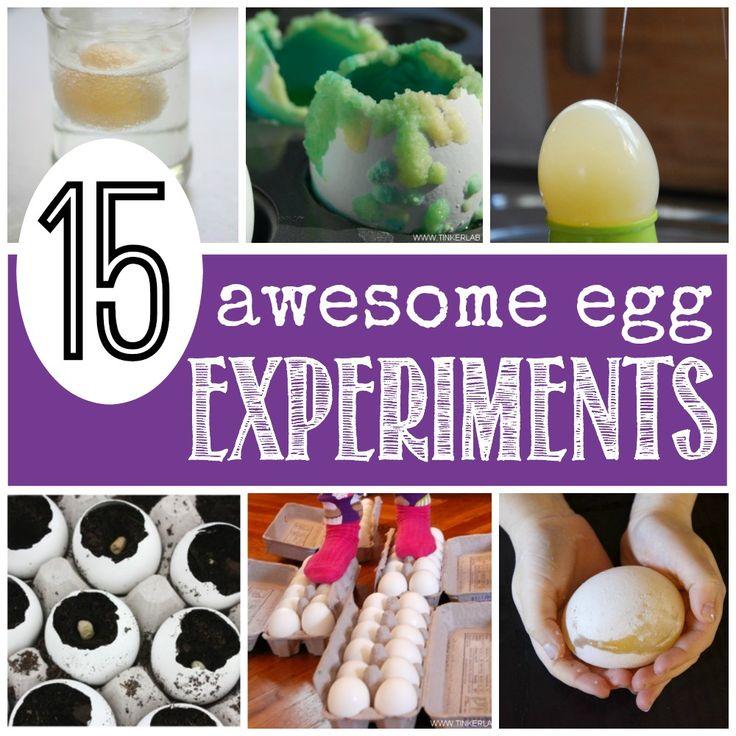 Egg In Vinegar Experiment For Kids   Egg experiments