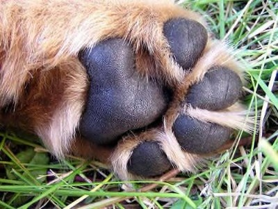 paw: Dogs Pet, Doggies Paw, Daawwwww Puppies, Animals Pet, Animal Piggy, Puppies Paw, Dogs Gon, Soft Puppies, Dogs Paw