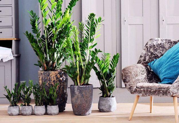 Зеленые экстремалы: 10 «неубиваемых» растений для вашего дома | Свежие идеи дизайна интерьеров, декора, архитектуры на INMYROOM