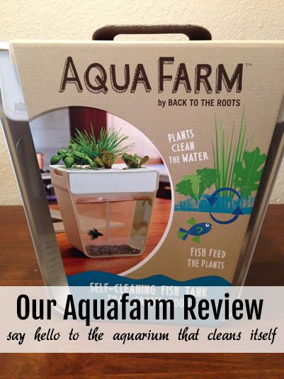 Our Aquafarm Review - The perfect home for your pet fish.