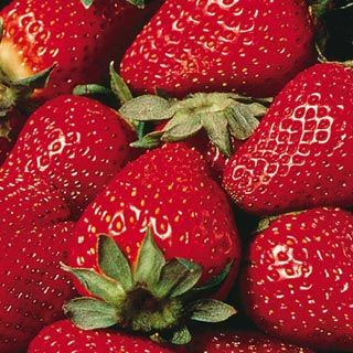 Eversweet Everbearing Strawberry. There's more information on them here: http://www.fast-growing-trees.com/Everbearing-Strawberries.htm  You don't harvest them all at once, so you'll have continuous fruit from spring to even until late fall depending on where you live! Very low maintenance.