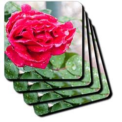 A red rose blossom shot up close in accented sedges Coaster