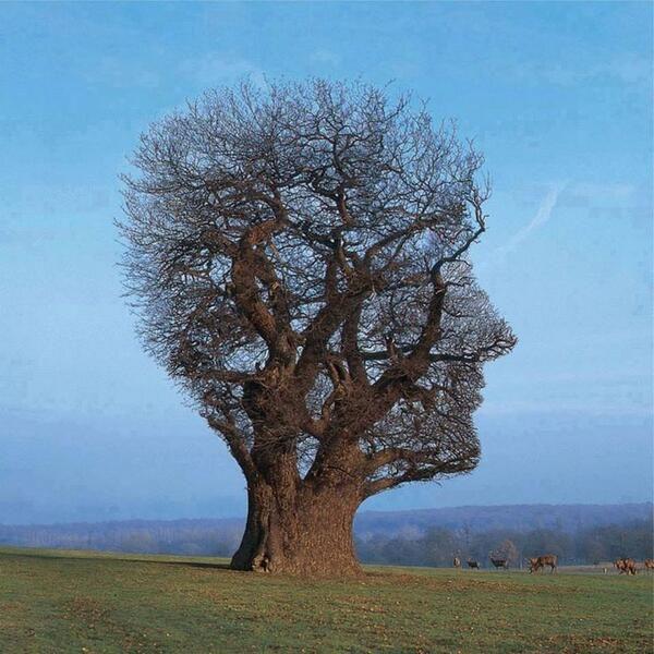 "#OperArt [work 29]  - ""Tree of Half Life"" di Storm Thorgerson (Inghilterra) #fotografia #stormthorgerson #vogue"