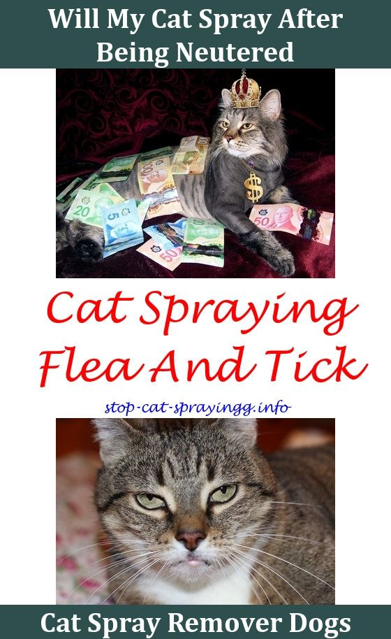 Anti Cat Spray For Furniture Can A Neutered Male Still How To Stop From Spraying Ideas Diy Urin