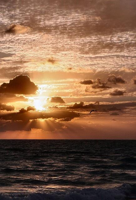 sunrise: Beautiful Sunri, Sunrises A, Sun Rise, The Ocean, Ocean Sunri, Beautiful Sunsets, Sunri Sunsets, Beautiful Things, Sunrises Sunsets