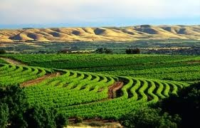 Carole's Chatter: McClaren Vale – a lovely wine region close to Adelaide and getting there on the world's longest reversible one-way freeway!