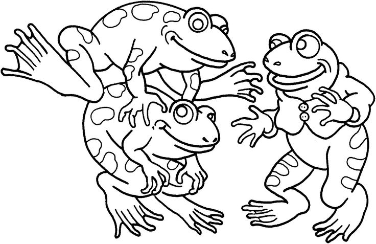 Three Frogs Playing Together