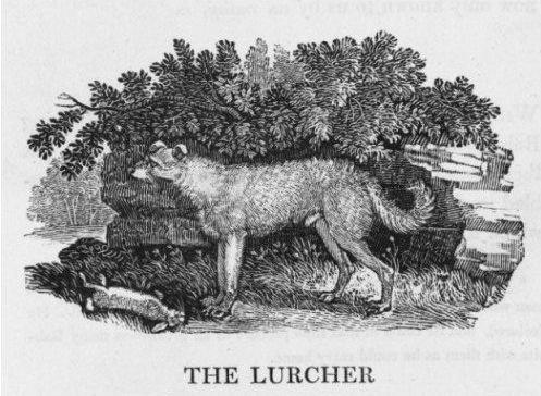 Lurchers