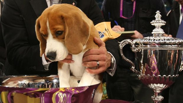 Westminster Dog Show Breed Winners Best Pics In Show Dogs