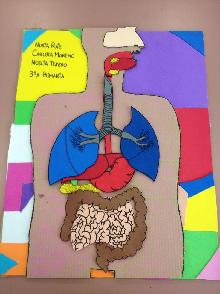 Trabajo de tercer curso de Magisterio. Para trabajar el aparato digestivo y respiratorio. Las piezas se pegan y despegan